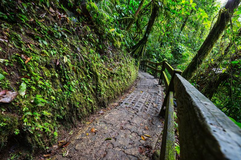 Hike in Costa Rica. Hiking in green tropical jungle, Costa Rica, Central America royalty free stock image