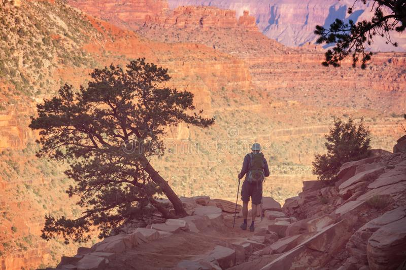 Hike in Grand Canyon. National Park royalty free stock images