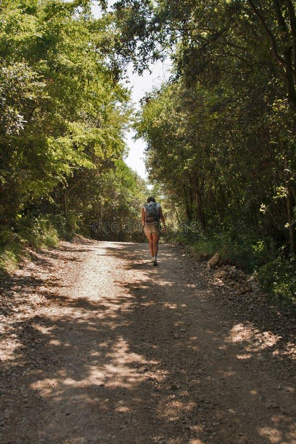 Hike longo na floresta fotos de stock royalty free