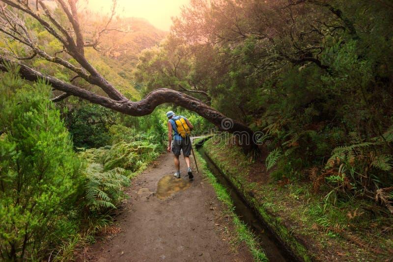 Hike in Madeira stock photos