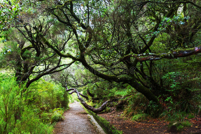 Hike in Madeira royalty free stock images