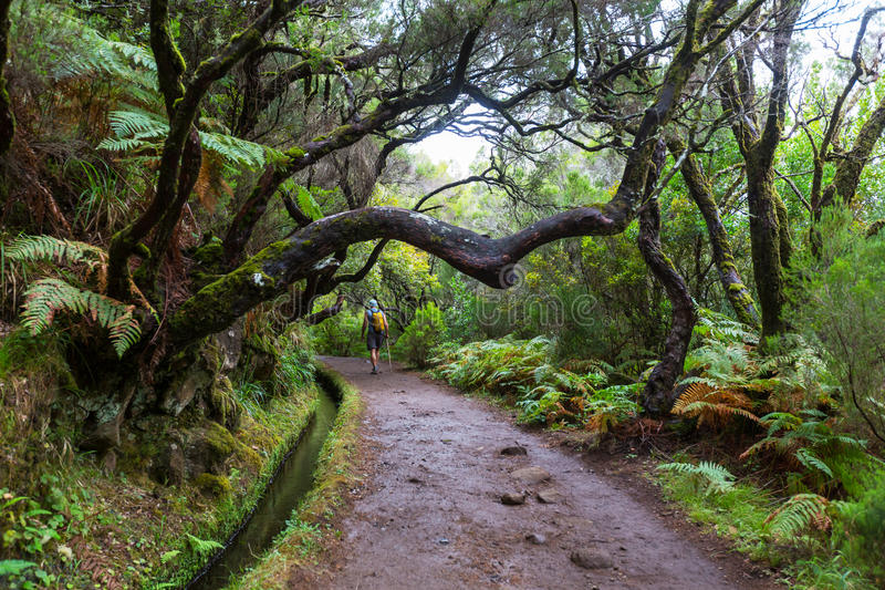 Hike in Madeira stock images