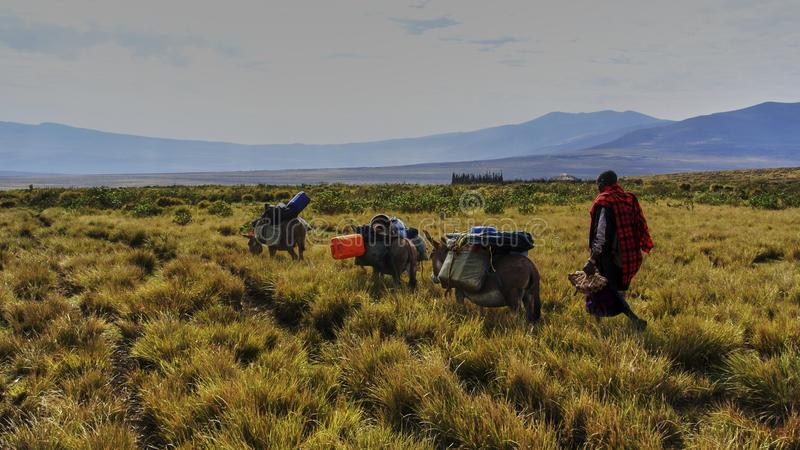Masai guide hike in the mountains. Hike in Ngorongoro Conservation Area Nationnal park Highlands craters en route for Bulati Village from Nainokanoka with Masai royalty free stock photography