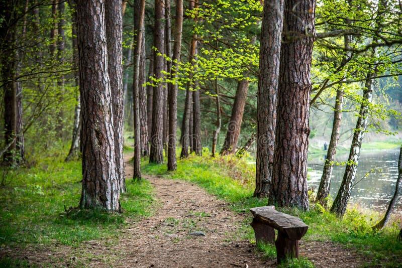 Hike path royalty free stock image