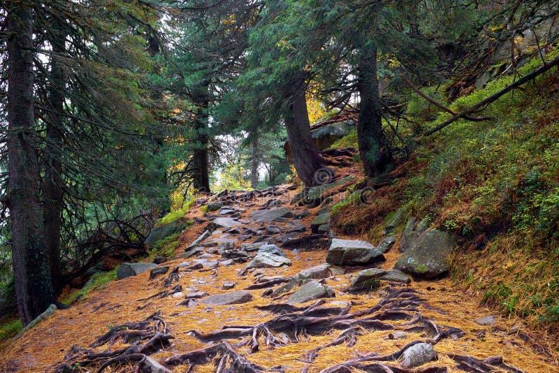 Hike trail among pine trees near to Strbske Pleso lake in High Tatras National Park stock photo