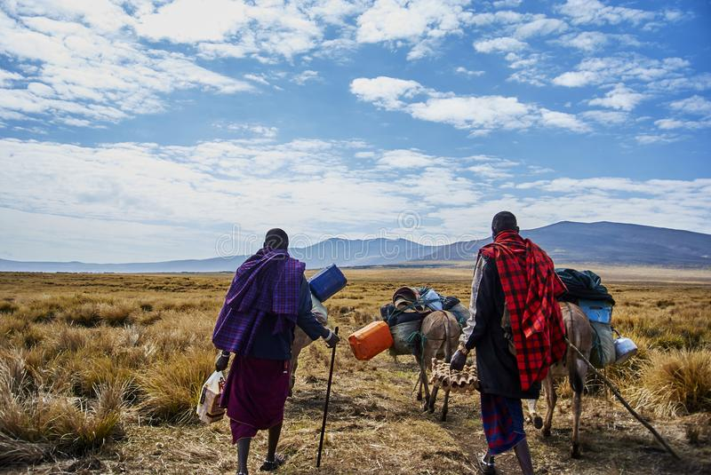 Masai guide hike in the mountains. Hikein Ngorongoro Conservation Area Nationnal park Highlands craters en route for Bulati Village from Nainokanoka with Masai stock photography