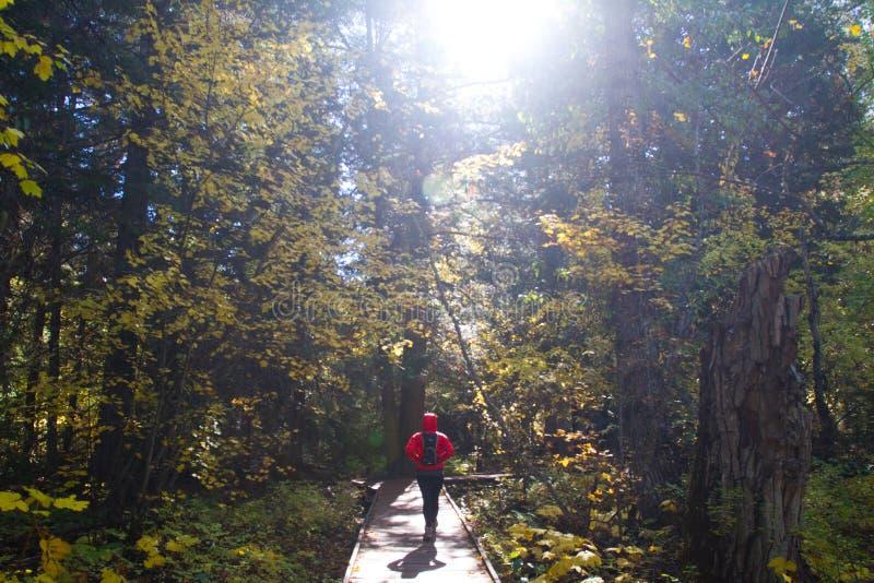 Hiker женщины идя вдоль променада на северном национальном парке каскадов стоковое изображение