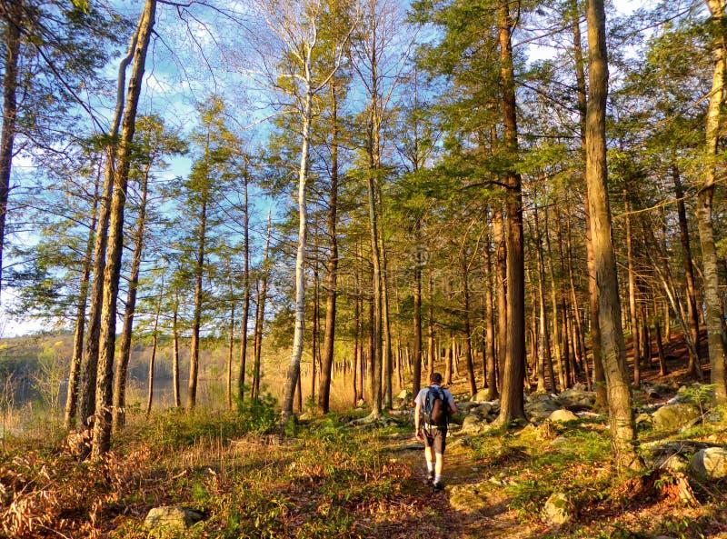 Hiker идя в древесины парка штата пруда заусенца стоковые фотографии rf