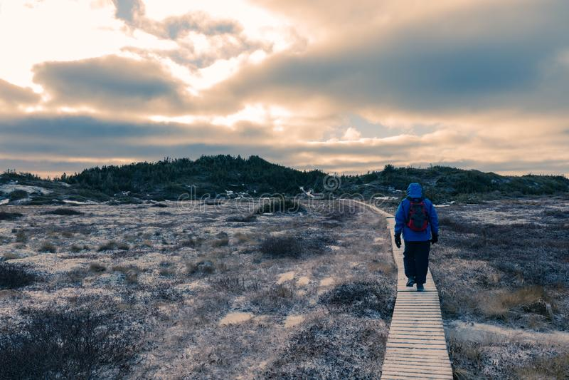 Hiker на ландшафте зимы деревянного променада замороженном стоковое изображение rf