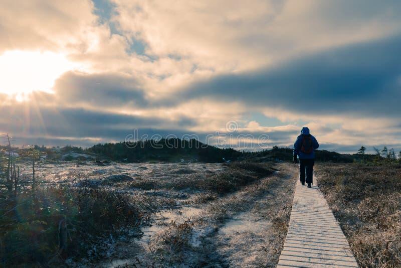 Hiker на ландшафте зимы деревянного променада замороженном стоковые фотографии rf
