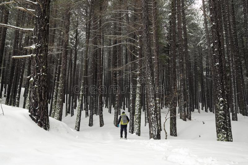 Hiker with backpack walking in winter forest of Etna Park stock photo