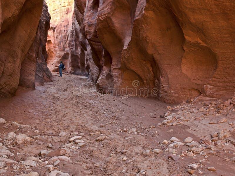 Download Hiker in Buckskin Gulch stock image. Image of navajo, passageway - 7260267