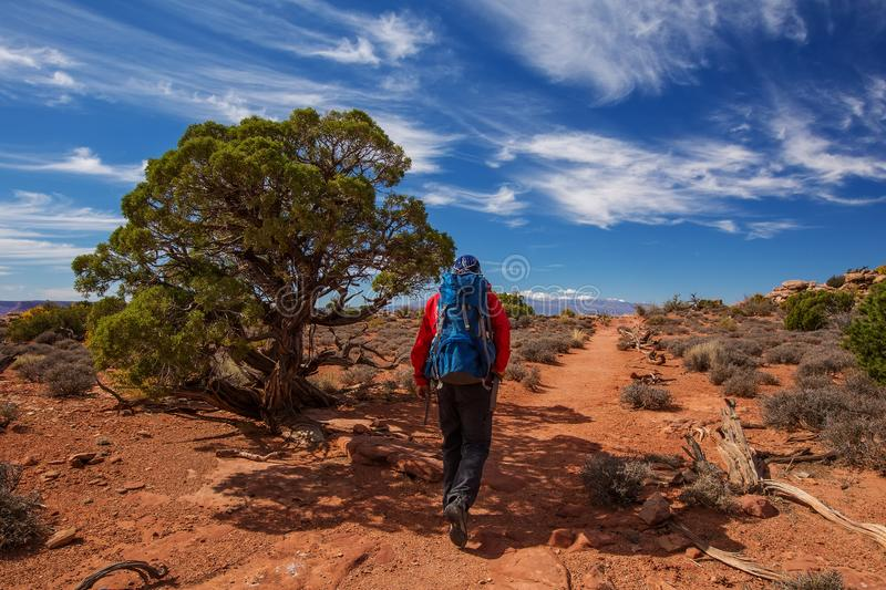 Hiker in Canyonlands National park in Utah, USA.  stock image