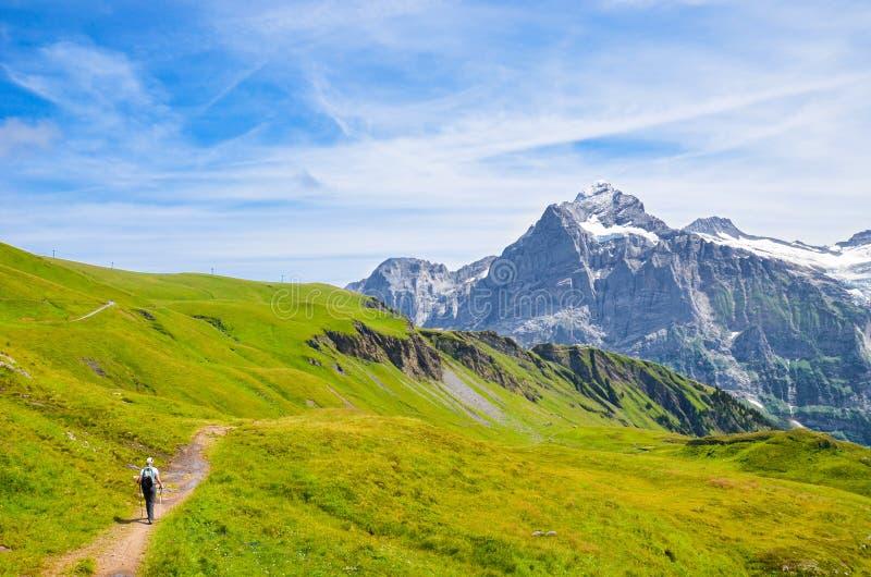 Hiker in de Zwitserse Alpen met wandelende polen Bergen Jungfrau, Eiger en Monch op de achtergrond Noordse wandeling Buiten royalty-vrije stock afbeelding