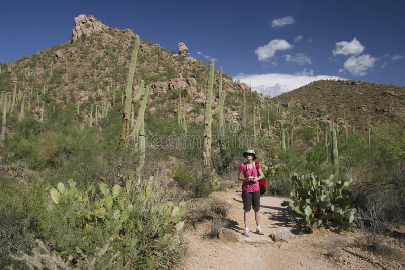 Hiker in the Desert - Saguaro National Park, Arizona royalty free stock images