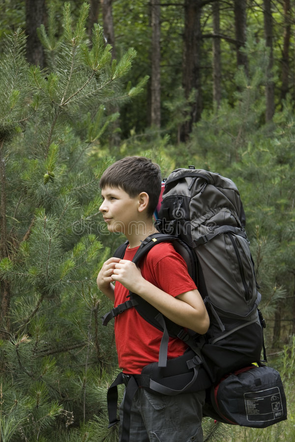 Download Hiker in forest stock photo. Image of sport, leisure, outdoor - 5390890