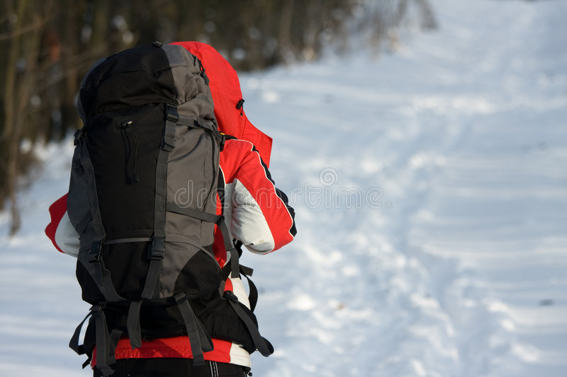 Download Hiker In Forest Stock Image - Image: 7639981