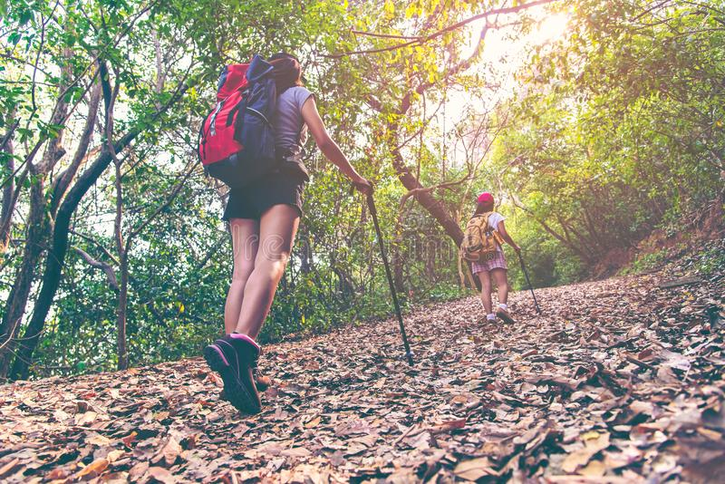 Hiker group young women walking in national park with backpack. Woman tourist going camping in forest. stock photo