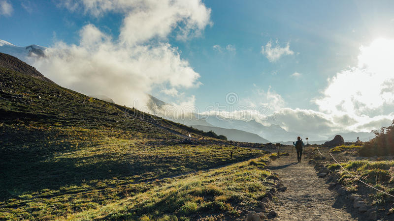 The Hiker Hiking into the Mountain. A hiker is hiking in the field at North Burroughs Mountain Trail with Mount Rainier in the background, Washington royalty free stock image