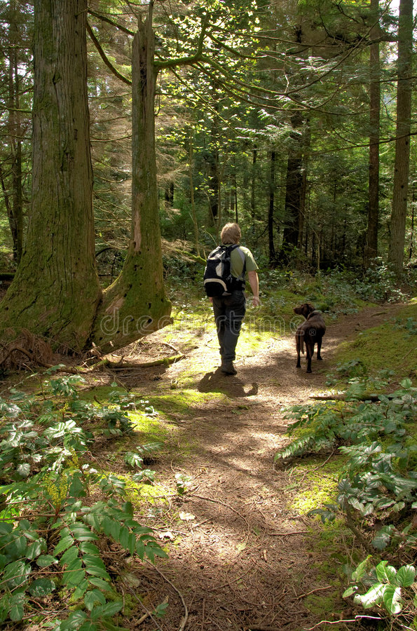 Hiker and his dog stock images