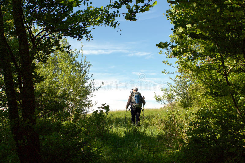 Hiker leaves the woods on the emilia romagna hills. In a sunny day royalty free stock photo
