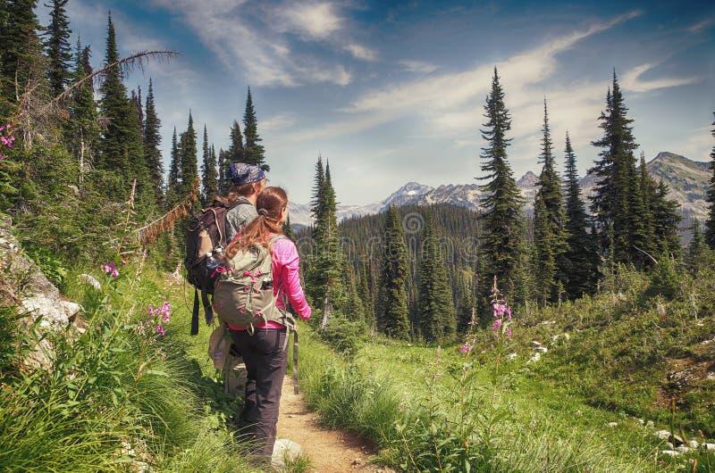 Hiker, Mount Revelstoke National Park, Canada stock images