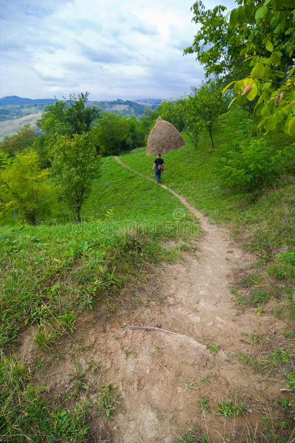 Download Hiker in nature stock image. Image of green, peaceful - 3775565