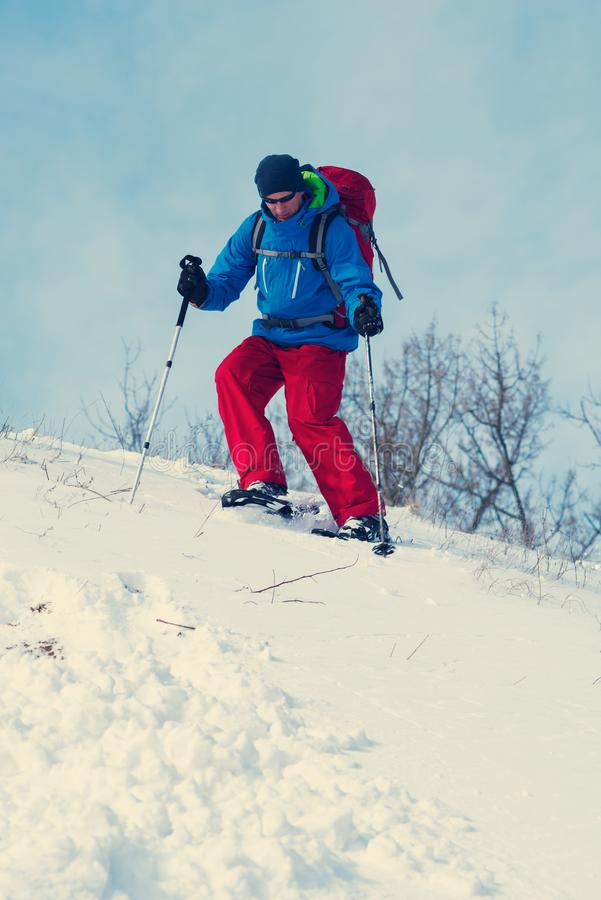 Hiker in snowshoes is walking down a hill in a winter forest royalty free stock photography