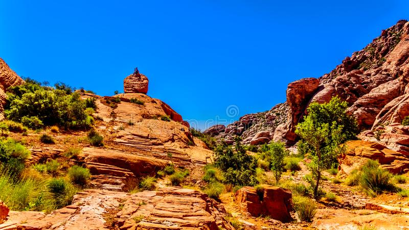 Hiker sopra una roccia nella Red Rock Canyon National Conservation Area vicino a Las Vegas, Nevada, Stati Uniti immagine stock