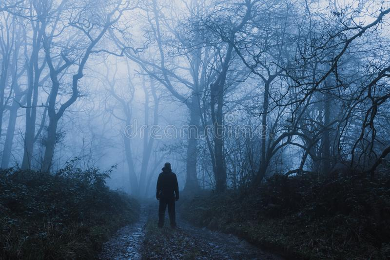 A hiker standing on a muddy, path through a spooky, eerie forest. On a mysterious foggy, winters day.  royalty free stock photos