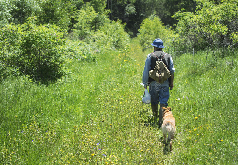 Hiker walking with dogs in mountain forest stock images