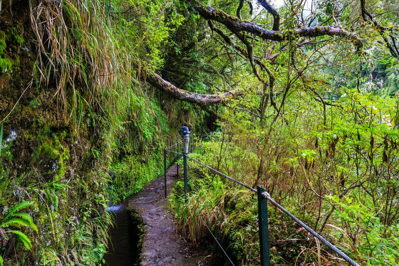 Hiker walking a trail along a levada in the mountains of madeira stock images