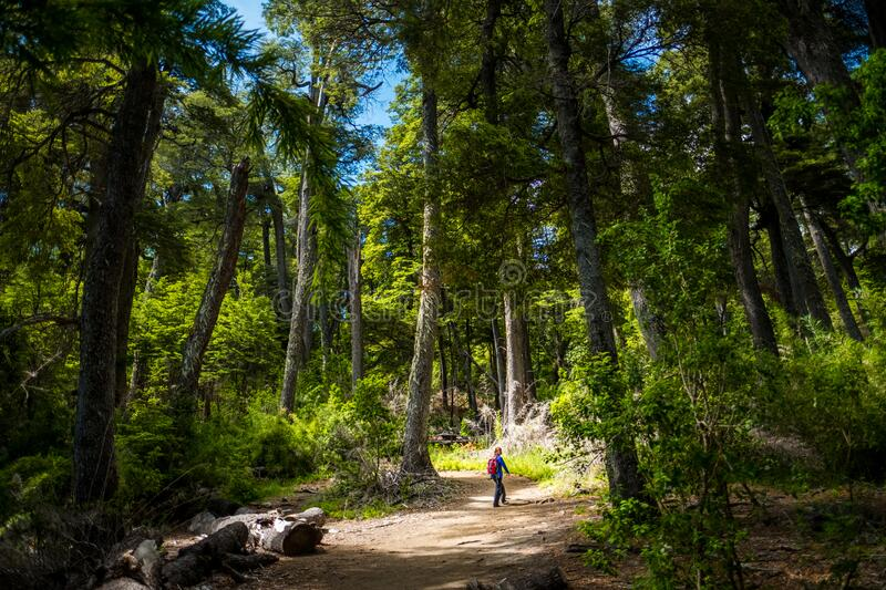 Hiker walks through the forest stock photography
