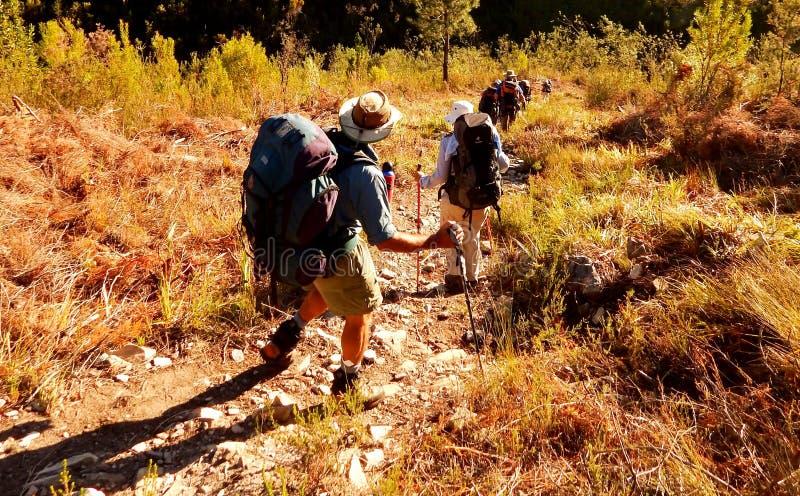 Hikers в солнце раннего утра стоковые фотографии rf