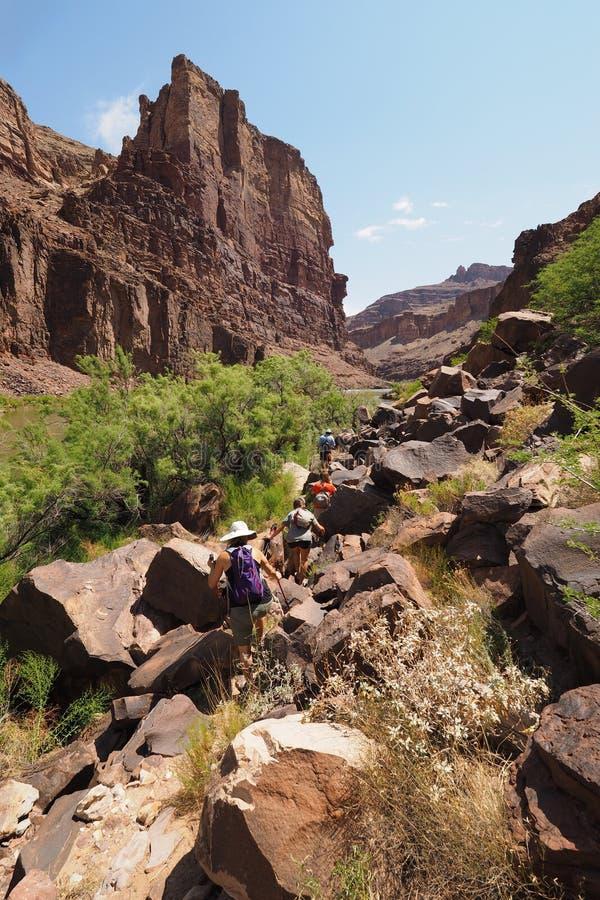 Hikers на следе Колорадо в гранд-каньоне стоковые фото