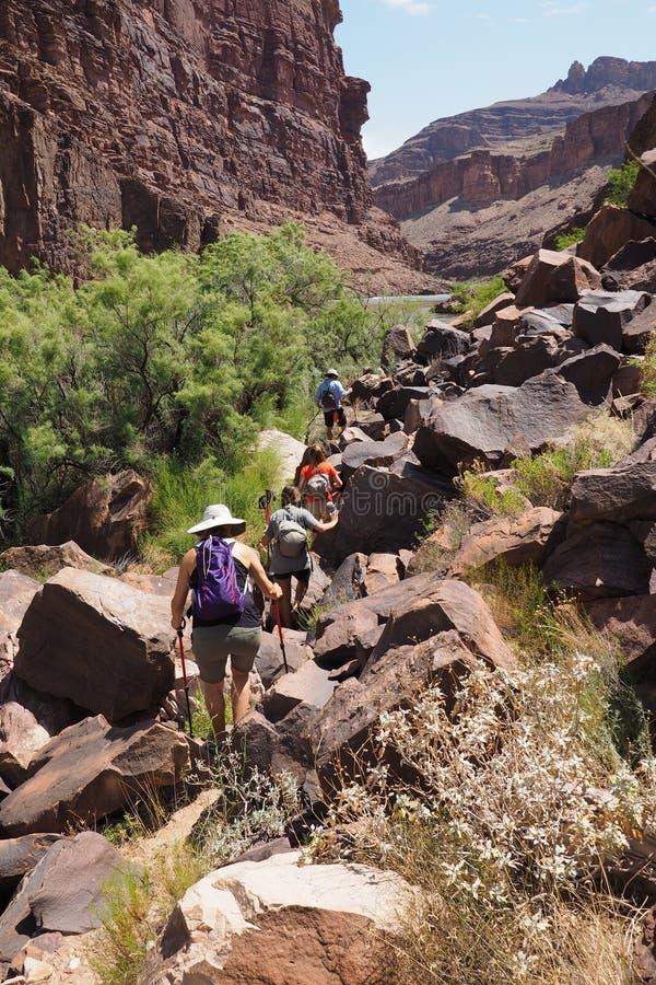 Hikers на следе Колорадо в гранд-каньоне стоковая фотография rf