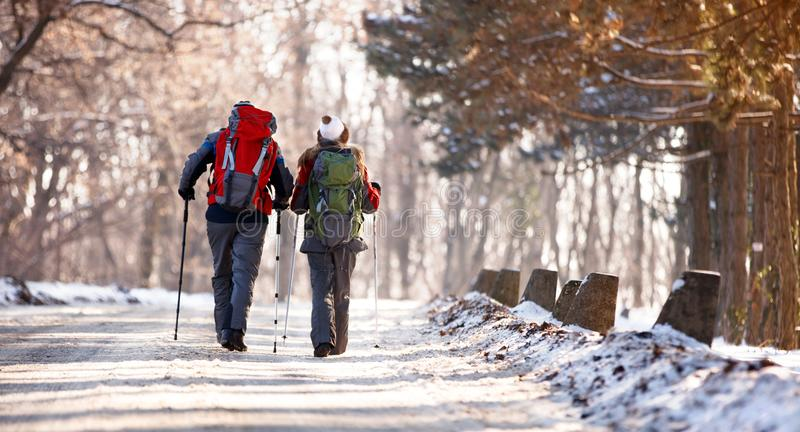 Hikers соединяют с рюкзаками, задним взглядом стоковое фото rf
