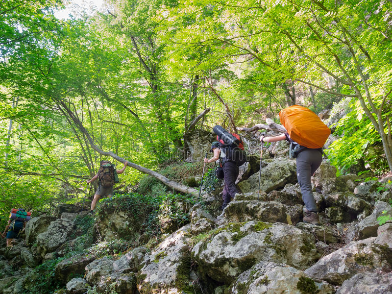 Download Hikers stock photo. Image of group, person, outdoors - 24843046