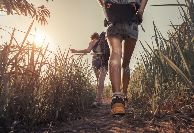 Hikers with backpack. Hikers walking through the meadow with lush grass at sunny hot day stock photo