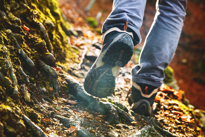 Hikers boots on forest trail. Autumn hiking. stock image