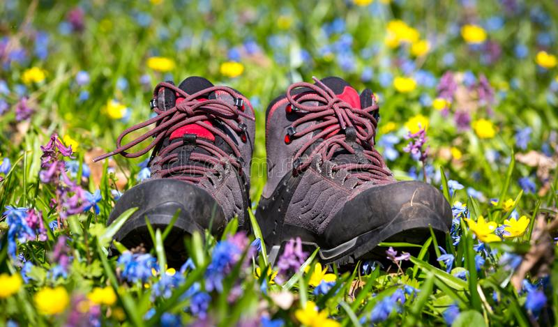 Hikers boots on wild flower meadow stock images