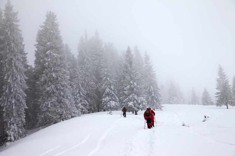 Hikers go up on snow slope in snow-covered forest at haze winter royalty free stock image