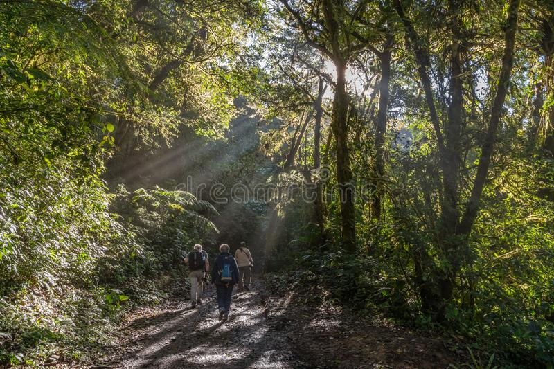 Hikers on jungle path with sunray`s breaking through the trees. In Costa Rica`s Cloud Forest Reserve stock photo