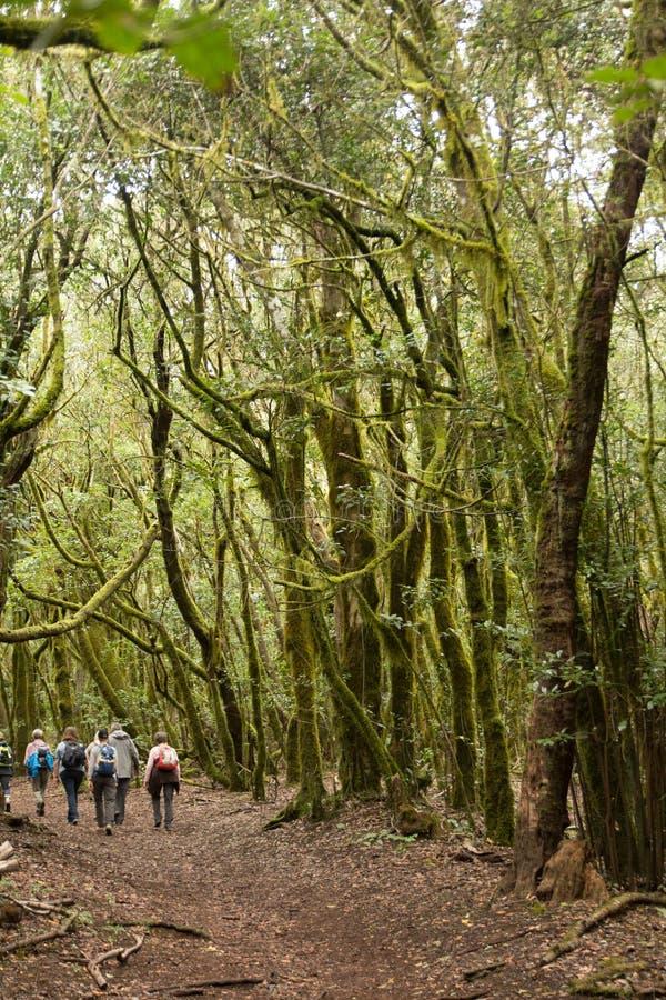Hikers walking in the national park Garajonay La Gomera stock image