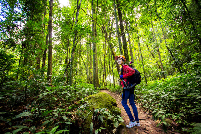 Hikers walking in the woods with a rich and mature trees, Trekker. Hikers walking in the woods with a rich and mature trees, Trekker royalty free stock photo