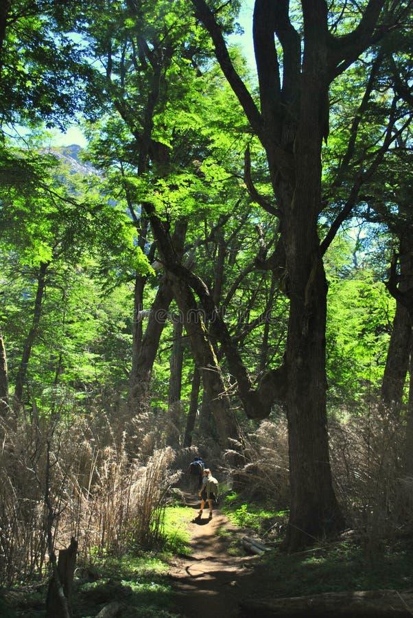 Hiking в древесинах стоковое изображение rf