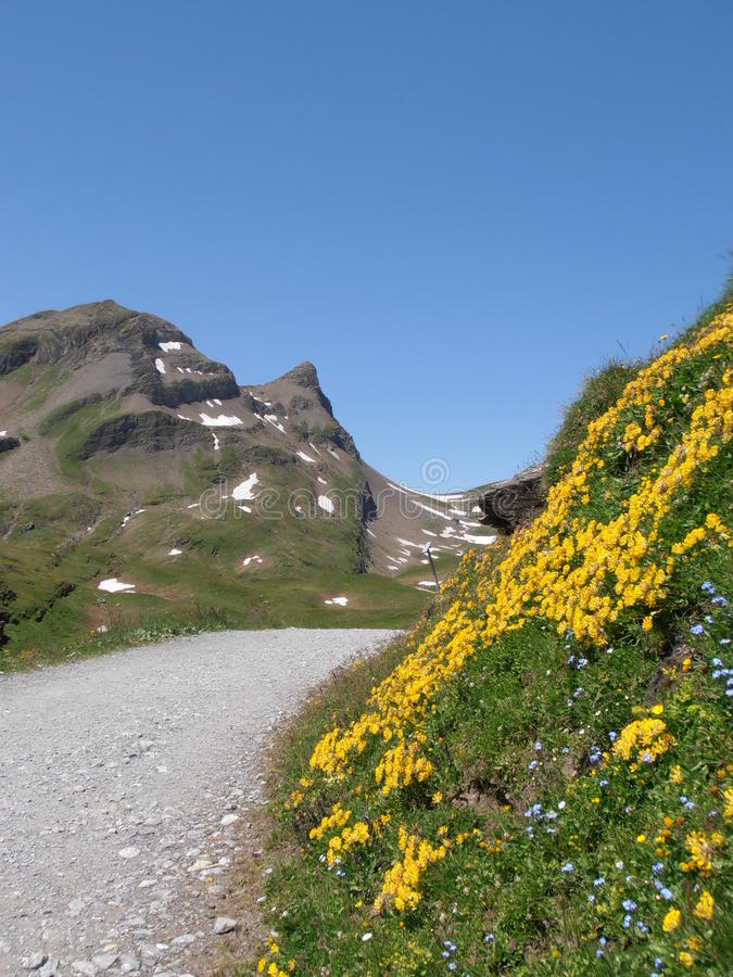 Hiking тропка к bachalpsee Швейцарии стоковое изображение rf
