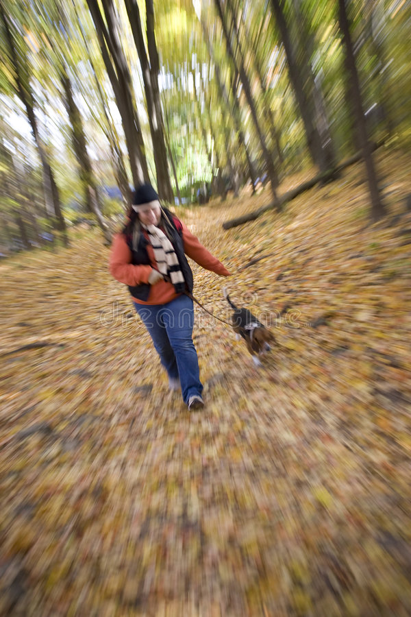 Download Hiking stock photo. Image of beagle, fall, foliage, beauty - 6910700