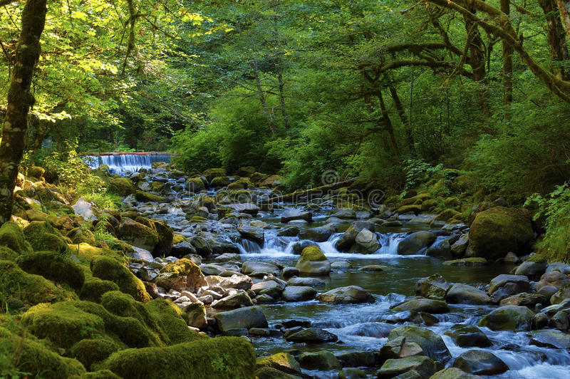 Hiking along Tanner Creek In the Columbia River Gorge. Hiking along the shady banks of Tanner Creek to Wahclella Falls in the Columbia River Gorge stock images