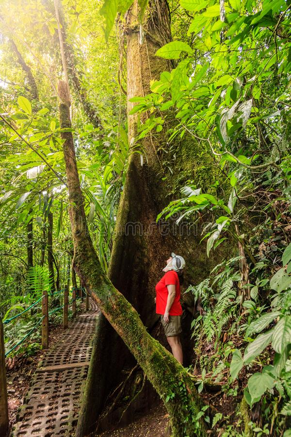 Hiking in Arenal Hanging Bridges Park stock photography